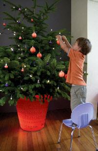 wwwplantdisplayhirecomwpimageswpa3aefa25_05jpg - Christmas Tree In A Pot